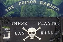 Wicked Garden / Witch gardens, poison plants, Gothic gardening, night blooming flowers and more.