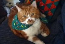 Morris the Cat!