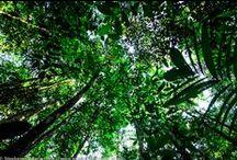 Rainforest Rescue: An Amazon Adventure / Inspiration for Rainforest Rescue: An Amazon Adventure - a middle-grade novel by Valerie Biel