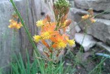 Jardín, paisajismo, plantas medicinales / La salud al alcance de la mano
