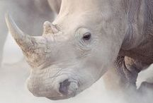 Rinoceronte Color