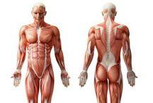 Anatomia - Umana