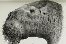 Illustrazioni- Animali BIANCO e NERO