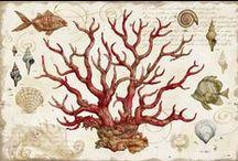 Illustrazioni - Il mondo del mare
