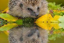 Fotografie - natuur / Om inspiratie op te doen