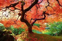 Trees / I love the trees...maybe because I love and I'm in peace with my ancestors :)