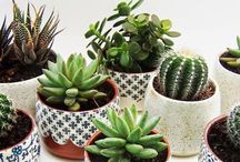 Succulents & Plants / Who doesn't love succulents, cactus, and other pretty green plants?