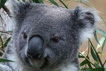 Australia - Weekend Getaways / Australia - Weekend Getaways