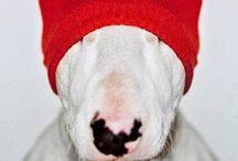 Mans best friend. / My love of doggies.. So many doggies.