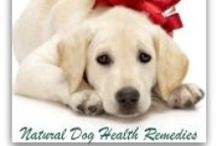 Natural Health For Pets