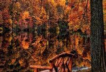 Awareless Autumn