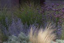 Plante Kombinasjoner/Plant Combinations