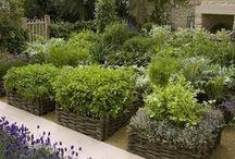 Kjøkkenhage/ Kitchen Garden