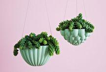 Plants / Plants / planting