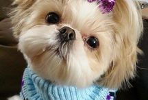puppy dress up / Cute puppies with their own fashions.  puppies cute, puppies funny, cute puppies, puppy love, puppy fashion