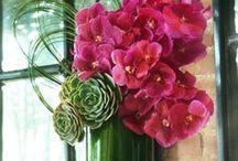 Flower Displays / Beautiful flower displays.