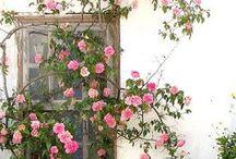 Secret Gardens / Garden inspiration.