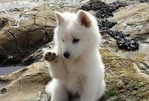 Cute Animals! :3 / Animals being cute! Baby animals!