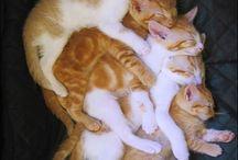Cats ㅇㅈㅇ