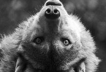 Foxes, Squirrels & Pomeranians