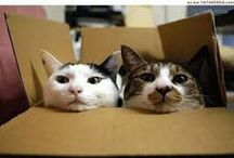 Cats and Cardboard / Cats love boxes, no matter what the size, here are some pictures to prove it!