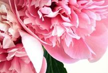 FLORA / Inspiration (and perhaps motivational) floral sceneries.