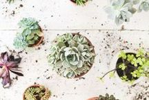 PLANTS / The underlying assumption is that plants are like people. Meaning that no two are the same and each has a personality all of its own.