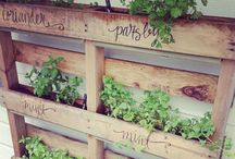 Kitchen Garden / all things food, grown whole and real