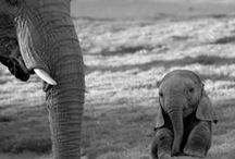 Animals : Mommies & Daddies /