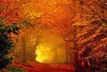 Fabulous Fall / Everything about this changing beautiful season