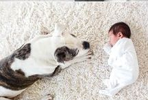 Newborn session with dog