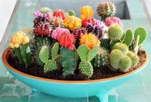Indoor Plants/Decorating / Houseplants, terrariums, air plants, decorating inspiration.