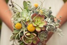 Garden Wedding / Grow your decorations yourself! Arbors, terrariums, succulents, party favors, decorations, and wearable accessories.