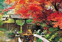 Gardens / by Debbie Witt