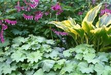 In my garden / Pomysły do urządzenia ogrodu