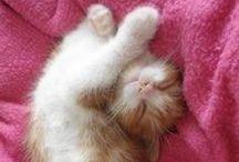 Koty, kicie, koteczki / Do oglądania na zasłodzenie