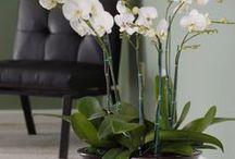 Цветы в доме / Цветы в доме