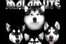 Alaskan Malamute Clothing, Shirts, Hoodies! / Products we sell on our website Rockin da Moots!