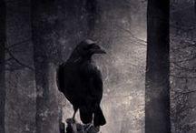 The Raven Saga YA Books Mood Board / The Raven Saga is a bestselling trilogy set in Canada. The first book, Raven, is FREE! http://www.amazon.com/Raven-Saga-Book-1-ebook/dp/B004ZZJ462/