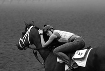 Happy Things / Sometimes horse racing just makes you smile!