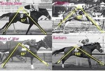 Interesting and Educational / Get the insider perspective on all things equine - lots of horse racing information here as well!