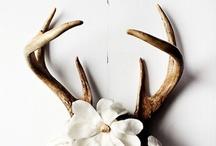 My lovely deer...