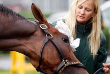Trainers / Meet horse racing's trainers, the men and women who have dedicated their live to their four-footed charges.