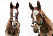 Foals of 2013 / The foals of 2013 are here! These future horse racing stars are just starting out in life. Could they be any cuter? We don't think so!