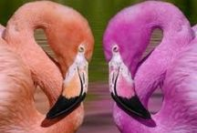 Flamingos / by Vicki Marseglia