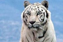 ANIMALS / photo reference of animals