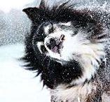 ANIMAUX DE COMPAGNIE / Pet-sitting, garde d'animaux, promenade de chien...
