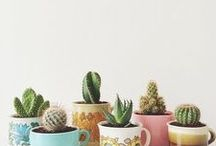☘ Succulents / All things succulents!
