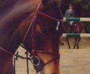 ARTROOMS: Horses/Equine Art