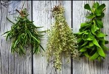 Herbs and Foraging / Herbs and Foraging